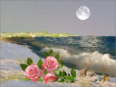 ca bouge - Page 6 Beautiful Gif, Beautiful Roses, Romantic Pictures, Beautiful Pictures, Gif Bonito, Sky Sunset, Beau Gif, I Love The Beach, Rock Crafts