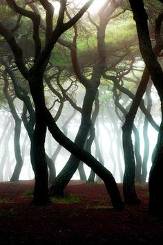 Creepy cool forest.
