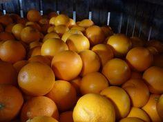 Sicilian organic oranges