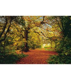 Autumn Forest Large Wall Mural