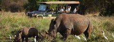 Rhinos, Kenya