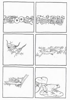 6 images séquentielles sur la métamorphose de la grenouille : de l'oeuf au têtard et du têtard à la grenouille