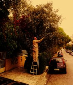 Urban harvesting in Capital city (Athens, Greece)