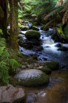 Columba Fall- Tasmania, Australia. My dream to go to Australia.