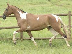 Opera do Barulho - Campolina mare Beautiful Horses, Simply Beautiful, Campolina, Donkeys, My Animal, Different Colors, Advent Calendar, Pony, Colours