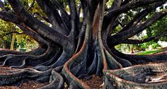Snake Tree by