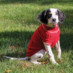 Perfect for those chilly fall evenings or to layer underneath another blanket. Keep your dog comfortable and fashionable in this cable knit sweater. Full length sweater that comes in a variety of sizes.