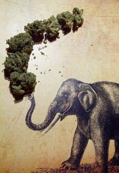 Marijuana research paper titles   Custom paper Writing Service Brefash