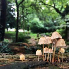 Little Mushroom family in the Park. Eine herbstliche Pilzfamilie im Park. Volksgarten Köln Südstadt Cologne Outdoors