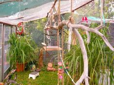 Pictures of Safe Plants for Finch Aviary | Planted Aviary - Aviaries - The Budgerigar Breeders Club Inc. Budgie ...