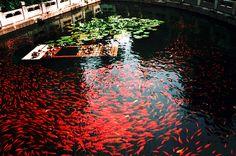 Ponds filters bottom bottom pond koi