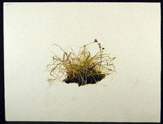 Andrew-Wyeth-Gravure-Print-WINTER-CORN-GRASSES-The-Walk