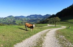 Steyr, Wanderlust, New Pins, Filling Station, Ski, Road Trip Destinations, Tours, Mountains, Hiking