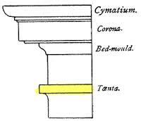Taenia Greek