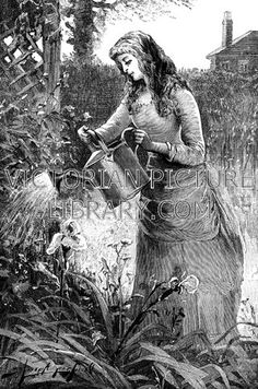 Gardening Girl. Charming Victorian illustration to download showing a picture of a girl watering her garden. Using a traditional galvanised metal watering can, she is tending a bed of irises.
