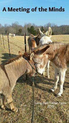 Mr. Z and Pacino exchanging thoughts. ~Long-Ears Foster Farm 2015