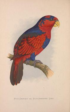 v. 3 - Parrots in captivity / - Biodiversity Heritage Library
