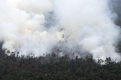 Indonesia Fires, Singapore Smog Likely Caused By Palm Oil Companies http://huff.to/1c5nc3b via @HuffPostGreen