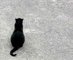 Black Cat, sitting in the driveway, watching the world go by.