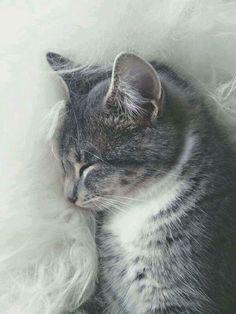 Puss dreams in the window.