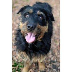 http://adopciak.pl/wyszukaj/psy/lista-psow/wpis/widok/41-do-adopcji-pies-dorian-6-lat