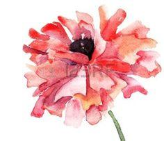 watercolor flower: Stylized Poppy flower illustration