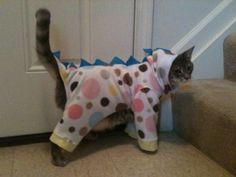 spotty dragon cat onesie