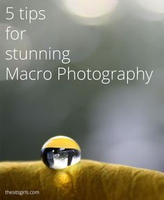 Photography Tips | Macro Photography | 5 tips for taking stunning macro photographs. Great for beginning photographers.