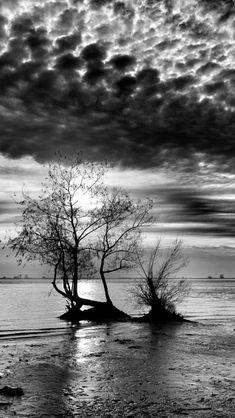 Dramatic black and white nature
