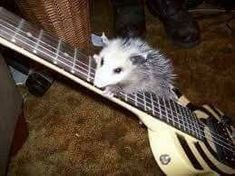 Play the guitar your the opossum man Baby Possum, Opossum, Reaction Pictures, Funny Pictures, Enfj, Mammals, Cute Animals, At Least, Pose