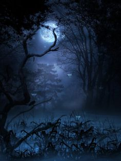 Enchanted midnight and the light of the moon