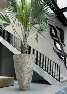 mooie bloempot met plant, gaaf als decoratie in huis Door erzsivandoorn