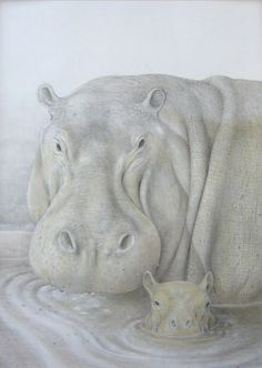 Hippo Pencil Drawing | hippopotamus- 78 x 103 - black and colored pencils