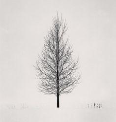 Tree Portrait, Study 5, Wakoto, Hokkaido, Japan (2005). Michael Kenna