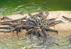 La planète des Crocodiles - Civaux (86 - Vienne)