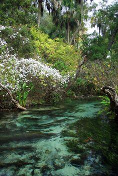 Juniper Creek . Florida