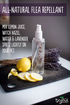 Flea repellent Did you know that many ingredients in your garden act as all-natural flea repellant? Steep lemon juice, witch hazel, water, and lavender together to make a simple spray that will help keep your pet flea-free and smelling fresh. Diy Pet, Flea Remedies, Flea Remedy For Dogs, Flea Spray For Dogs, Homemade Dog, Homemade Flea Spray, Diy Stuffed Animals, Pet Health, Flea Repellant