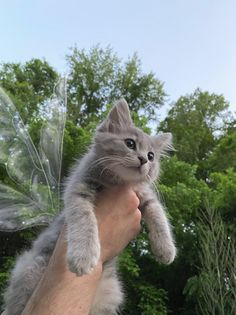 Cute Baby Cats, Cute Kittens, Cute Little Animals, Cats And Kittens, Photo Chat, Cat Aesthetic, Fluffy Animals, Cute Creatures, Pretty Cats