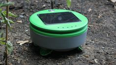 """Meet Tertill, the Solar Powered Weeding Robot that's like a """"gardening roomba"""". Tertill is an adorable robot that will roam your garden every day cutting . Hydroponic Grow Box, Hydroponics, Solar Video, Small Solar Panels, Grow Boxes, New Inventions, Awesome Inventions, Tidy Up, Weeding"""