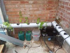 Hydroponic Gardening Ideas How to Setup and Run a Hydroponics System - My family and I have a greenhouse, and each year we usually set up tomatoes and basil, sometimes other veg like Chiles. I thought I would share some knowledge.