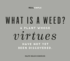 """""""What is a weed? A plant whose virtues have not yet been discovered."""" —Ralph Waldo Emerson #quotes"""