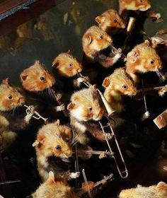 Im Naturkundemuseums entdeckt: Orchester der toten Hamster - Leipzig - Bild.de