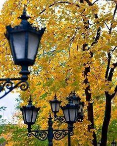 Autumn Scenery, Autumn Trees, Autumn Leaves, Autumn Day, Autumn Summer, Autumn Aesthetic, Fall Pictures, Fall Harvest, Fall Season