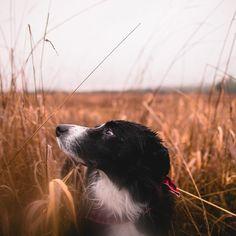Wet dog wet lens.