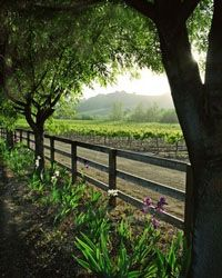 Outdoor Scene Mural For Wine Cellars Click Here To See More Cellar Designs