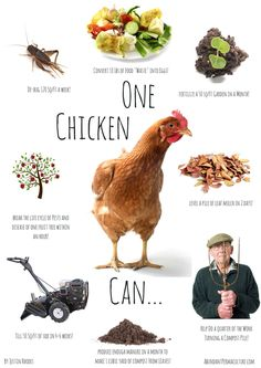 Advantages of keeping chickens!