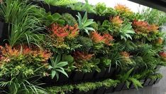 BEST 10 PLANTS FOR VERTICAL GARDENS Vertical gardens soften dull walls and breathe life into concrete-heavy urban spaces. Grasses, succulents and small perennial shrubs thrive in these contained structures, as do herbs, ferns and many more plant species. Garden Trellis, Herb Garden, Vegetable Garden, Vertical Garden Plants, Vertical Gardens, Gutter Garden, Bottle Garden, Home Landscaping, Landscaping Design