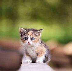 161 Mejores Imágenes De Gatitos Tiernos Fluffy Animals Cut