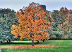 Autumn, University of Waterloo Alma Mater, Places To Visit, Shots, University, Autumn, Nature, Plants, Naturaleza, Fall Season