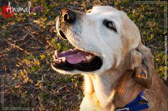 Tos de perreras. Artículo en animalart.mx #animales #perros #mascotas